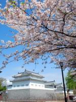 駿府城と桜